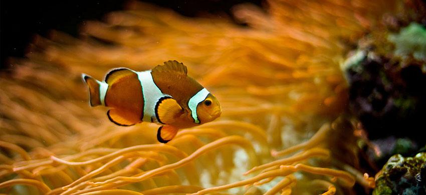 acquario-lisbona